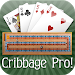 Download Cribbage Pro Online! APK
